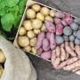 Лучшие в 2018-2019 году: новые сорта картофеля на выставках