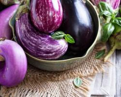 Баклажаны в теплице — все секреты выращивания капризного экзота