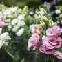 Выращивание эустомы из семян: правила, советы, хитрости, личный опыт