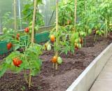 Все способы правильной подвязки помидоров