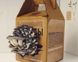 Грибная ферма в коробке! Разбираемся как легко выращивать грибы дома