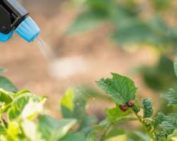Лучшие инсектициды. Рейтинг отравы от колорадского жука