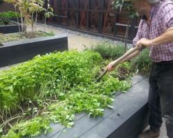 Зеленые помощники. Сидераты — назначение, особенности, советы по их агротехнике