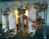 Простые и эффективные способы выращивания грибов в домашних условиях