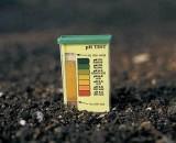 Кислая почва: как не допустить гибели посадок. Причины кислой почвы, определение, методы нормализации