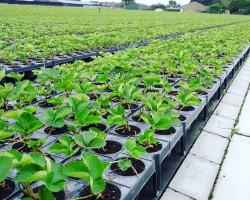 Что сеять на рассаду в феврале? Обзор овощных и цветочных культур