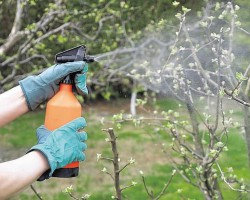 Комплекс мероприятий по обработке яблонь весной от болезней и вредителей