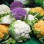 Капустная клумба: как вырастить цветную капусту в открытом грунте