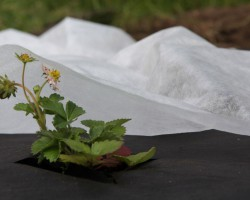 Обзор укрывных материалов: от заморозков, вредителей, сорняков. Выбираем лучший