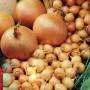 Посадка лука под зиму — как сделать грядки, внести удобрения и вырастить урожай