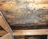 Как защитить древесину от плесени и гниения — советы специалистов
