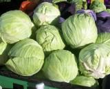 Самые лучшие урожайные сорта капусты для открытого грунта
