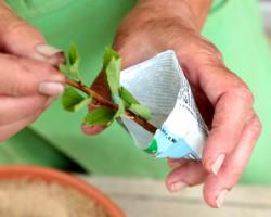 Биостимулятор роста «Корневин» — назначение, советы и секреты успешного применения
