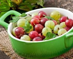 Секреты выращивания сочных и сладких ягод крыжовника