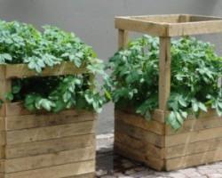 Под соломой, в пирамиде, на грядке: необычные способы вырастить картофель