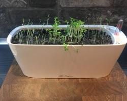 Помогите разобраться почему не растет зелень на подоконнике