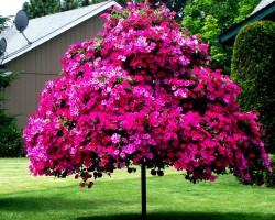 Разведение петунии рассадой: что нужно знать об уходе и выращивании
