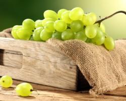 Виноград «Восторг» — белый мускатный сорт высшего качества!