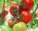 Выбираем лучшие сорта помидор 2018-2019 года. Наш рейтинг сортов для теплицы и открытого грунта