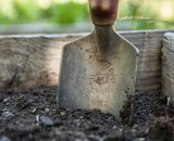 7 основных видов почв: характеристики и свойства, оптимизация и окультуривание почв