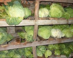Самые эффективные способы хранения капусты зимой. Советы опытных огородников