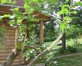 Правила и способы прививки яблонь весной, летом, осенью. Инструкции для начинающих