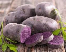 В чем особенность фиолетового картофеля: минусы, плюсы и лучшие сорта
