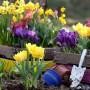 Тюльпаны: особенности их выращивания и лучшие сорта