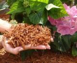 Все о мульчировании почвы: польза, технологии, материалы
