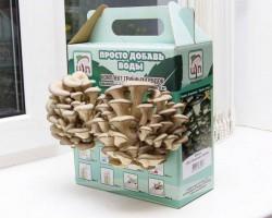 Хочу купить грибную коробку, кто нибудь уже пробовал такие?