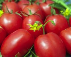 Как выбрать и вырастить томат «Де Барао». Неприхотливый и выносливый сорт
