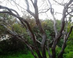 Как эффективно засушить дерево в саду. Инструкция и советы бывалых огородников