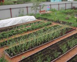 Как готовить и обрабатывать грядки для весеннего посева
