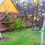 Готовимся к зиме: осенняя обработка сада от вредителей и болезней. Порядок работ