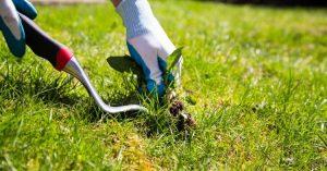 Способы борьбы с сорняками на полях