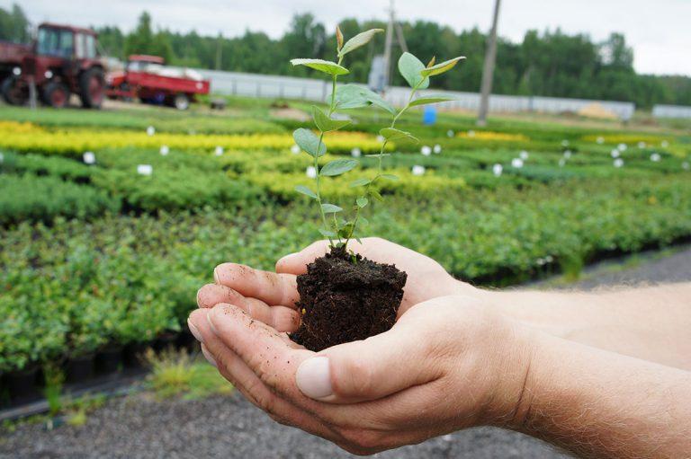 Выращивание ежевики семенами 46