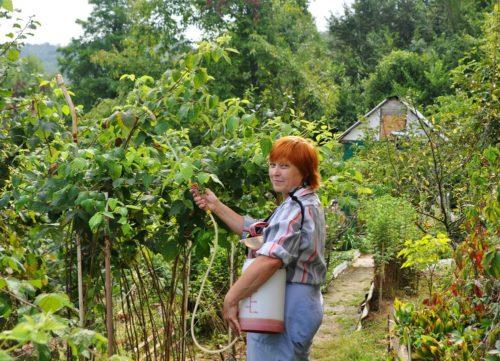 Для чего нужен медный купорос в садоводстве