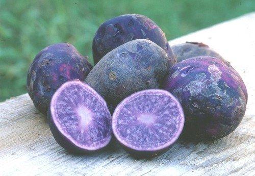 http://seloveselo.ru/wp-content/uploads/2017/11/Purple_potatoes.jpg