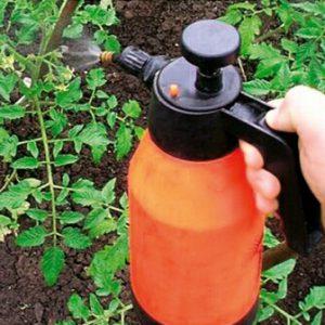 Сколько хранится раствор фитоспорина м. Инструкция по применению фунгицида фитоспорин м. Проращивание семян в «Фитоспорине»
