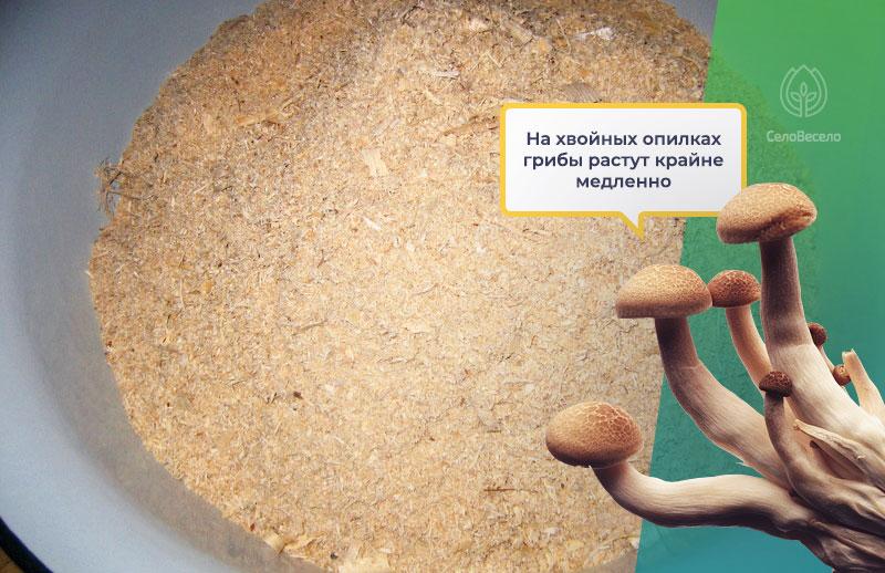 Опил, как субстрат для грибов