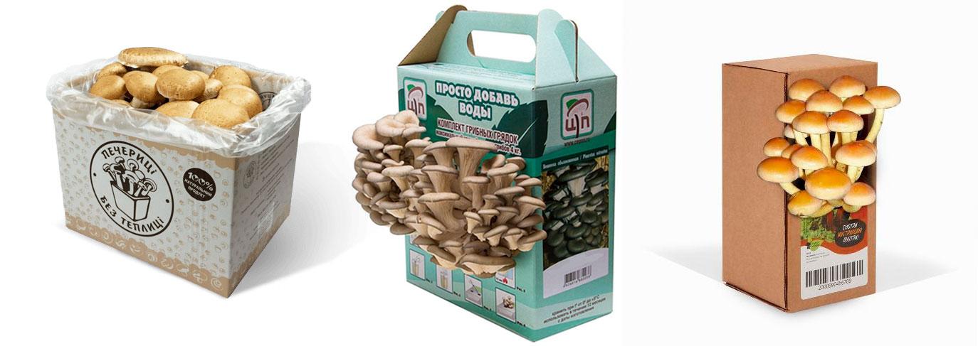 домашние грибы в коробке