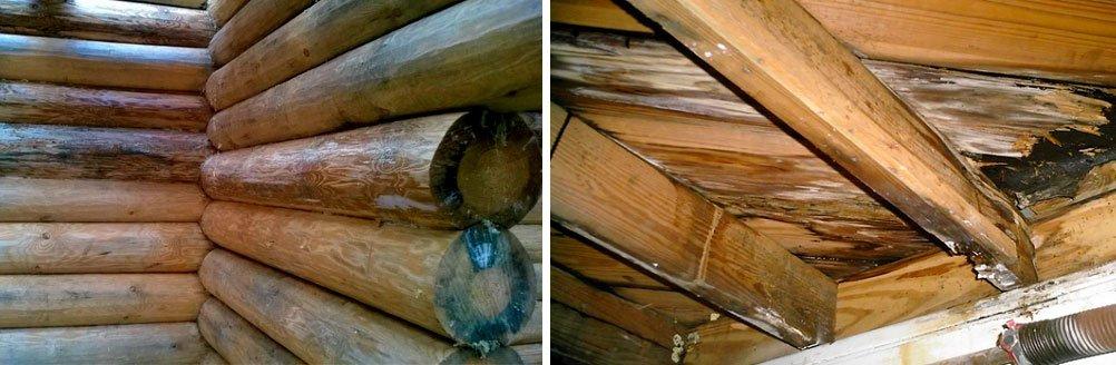 Грибок и плесень на древесине