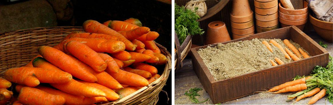 Особенности хранения моркови в домашних условиях зимой
