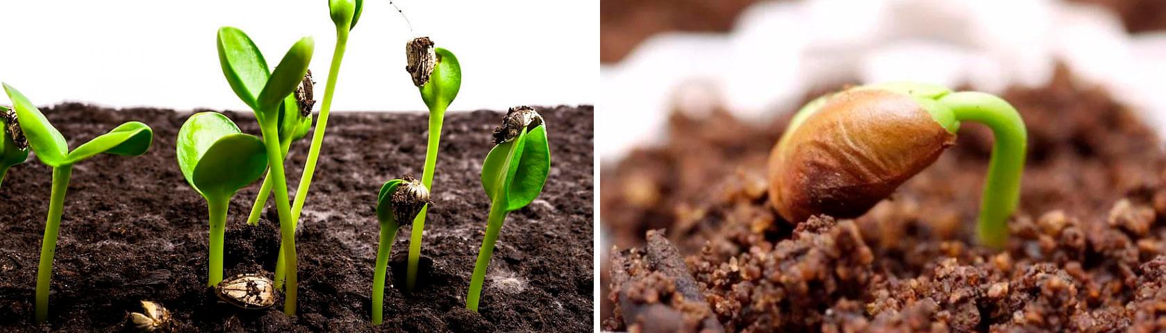 Проверка качества семян