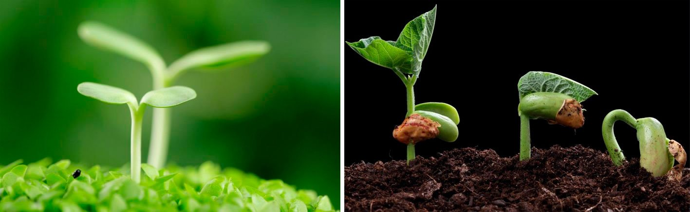 почему плохо всходят семена