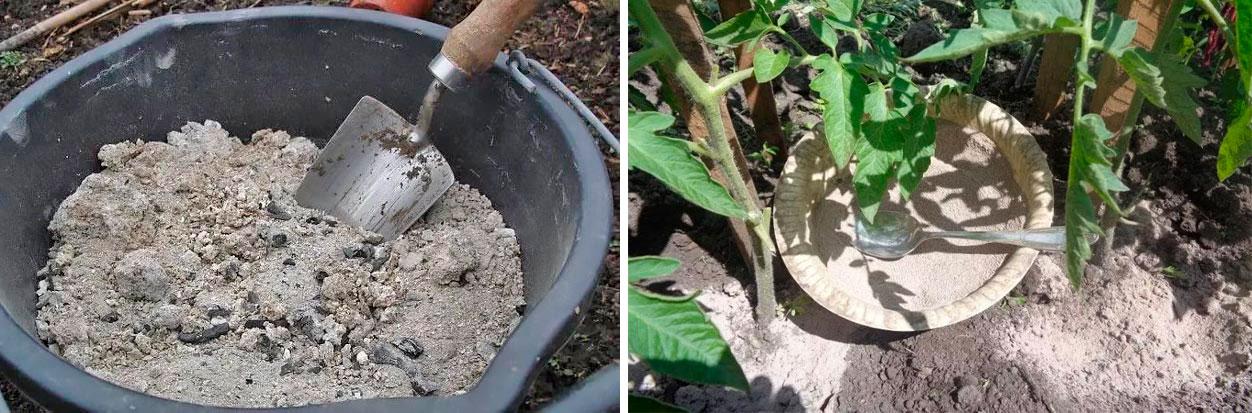 Зола для рассады помидоров как настоять и подкормить удобрением дома